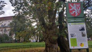 Tańczący dom, cerkiew Cyryla i Metodego, plac z historycznym drzewem platanem.