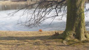 Весна пришла в парк Уяздовский в Варшаве-2