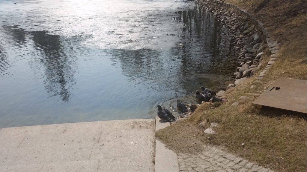 Park Ujazdowski w Warszawie wiosną-3