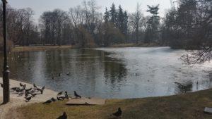 Весна пришла в парк Уяздовский в Варшаве-1